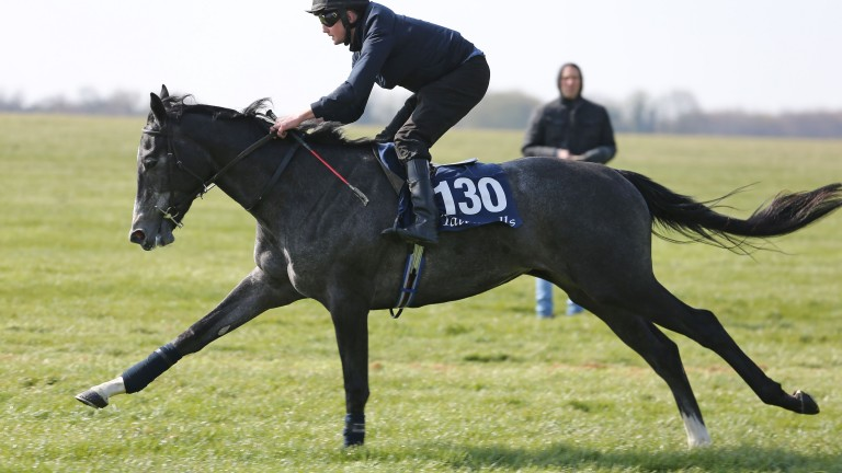 Tattersalls Craven Breeze Up Sale entries are now online