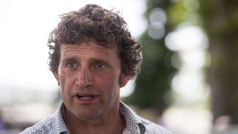 Paul Nolan: trains National Hunt Chase runner-up Discorama