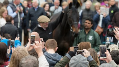 Main attraction: Sprinter Sacre poses at the Open Day in 2017