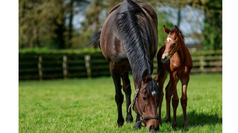 Maternal bliss: Treve with her newborn filly by Siyouni