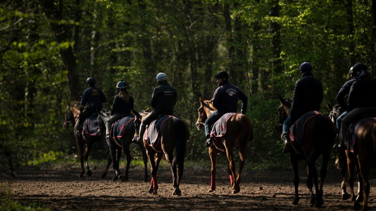 Measures announced by France Galop are designed to boost the number of two-years-olds in training, as well as to encourage trainers to campaign them more aggressively