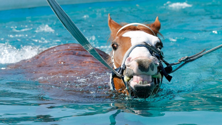 Mark Johnston inmate Nordano in the pool at the trainer's Middleham yard
