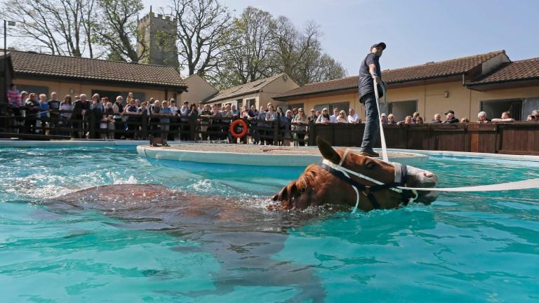 Swimming demonstration: crowds watch Nordano at Mark Johnston's yard