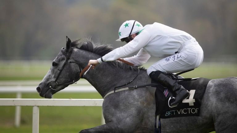 Decrypt: trained by Paddy Twomey in Ireland last year