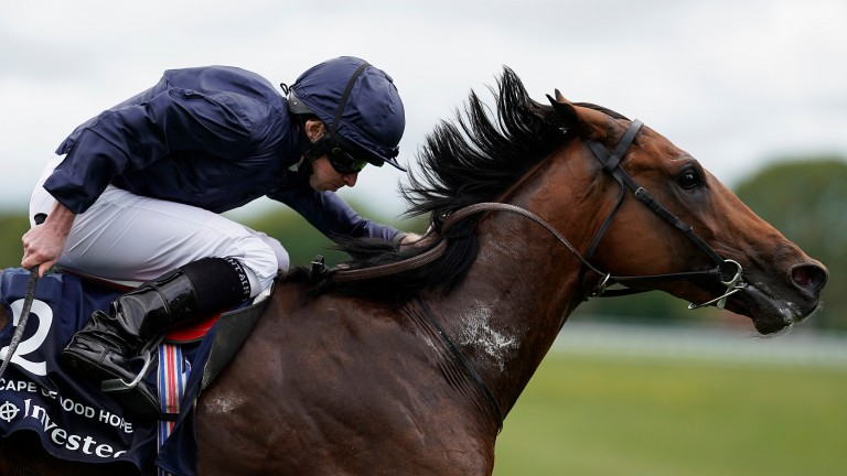 Cape Of Good Hope: one of two runners in the Belmont Derby for Aidan O'Brien