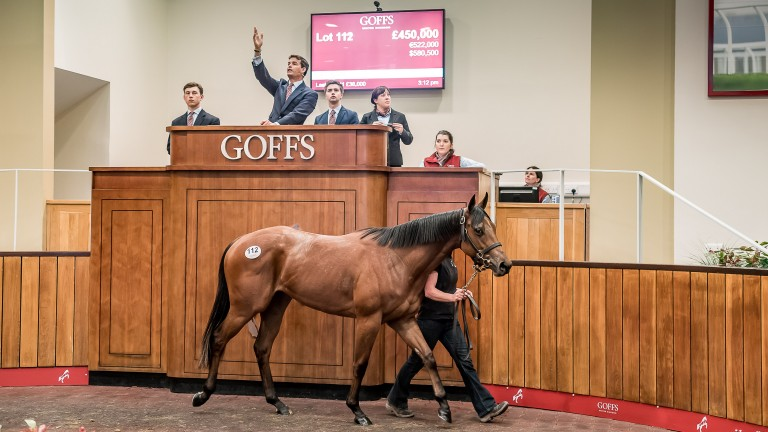 Lot 112: the sale-topping Siyouni filly in the Goffs UK ring before being knocked down for £450,000