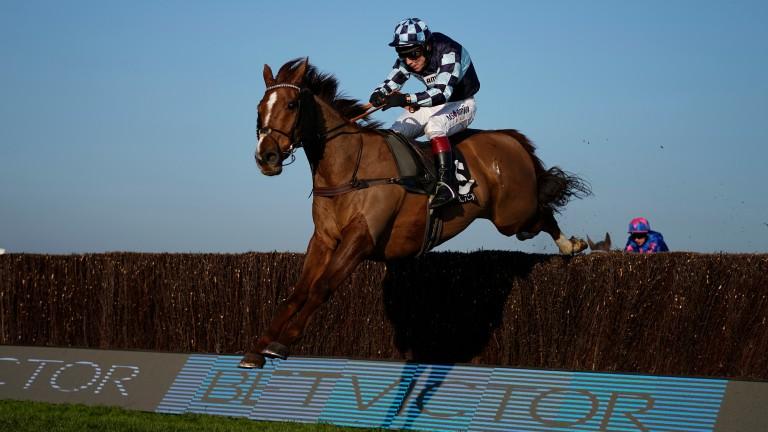 Rock The Kasbah: winner at Cheltenham earlier this season