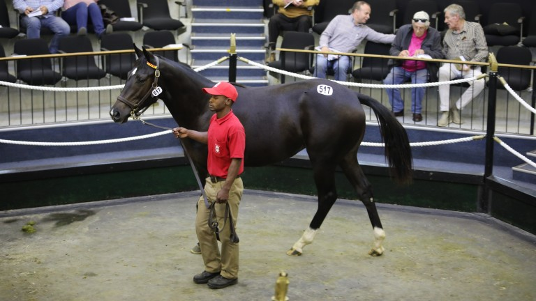 The filly by Gimmethegreenlight out of Scarlet Grits is led around the octagonal ring