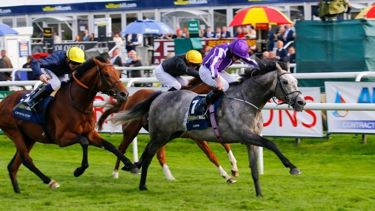 Dual Classic winner Capri warms up for Gold Cup at Leopardstown