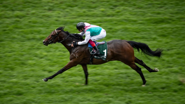 Calyx: maintained unbeaten record with impressive win at Ascot