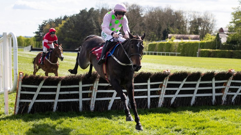 Benie Des Dieux: would be unbeaten had she not crashed out at the last in the Mares' Hurdle last year