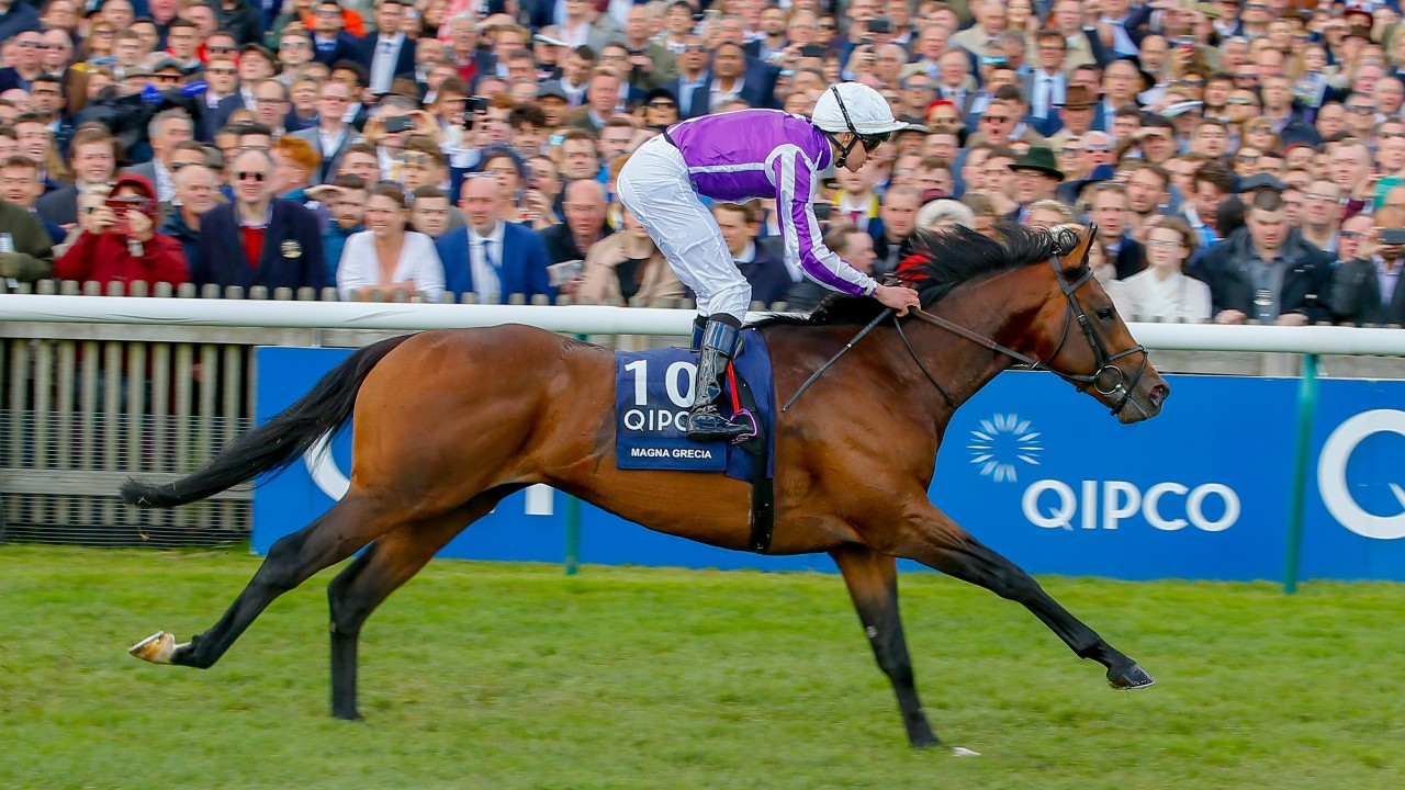 Image result for magna grecia 2000 guineas