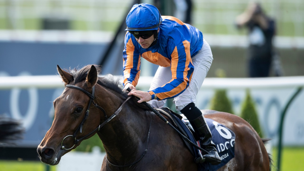 Image result for hermosa 1000 guineas