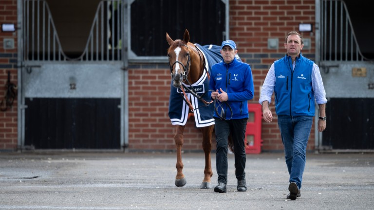 Sayyida's half-brother Masar won the 2018 Derby