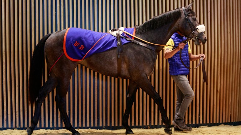 Lot 6: the Kingman filly in the ring before being signed for by Anthony Stroud at ?800,000