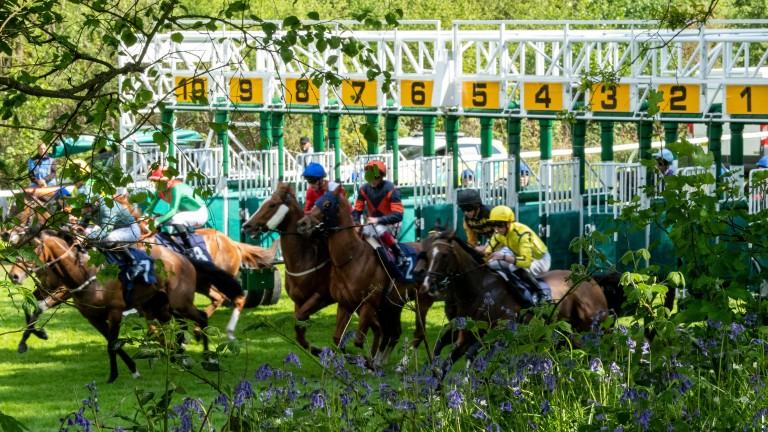 Lingfield: stages racing on Saturday evening