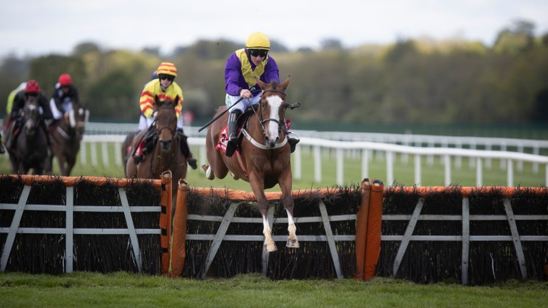 Foveros: one of two runners for Willie Mullins