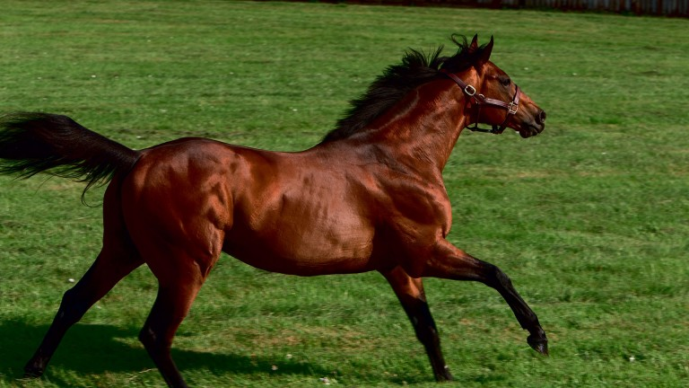 Farhh: stands at Dalham Hall Stud at a fee of £10,000
