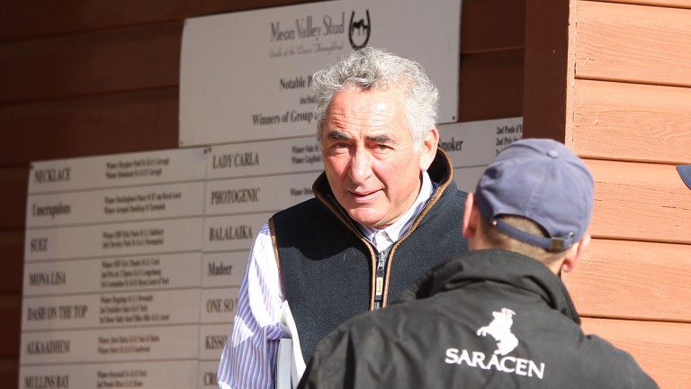 """Mark Weinfeld: """"We've been very lucky with horses who haven't sold over the years"""""""