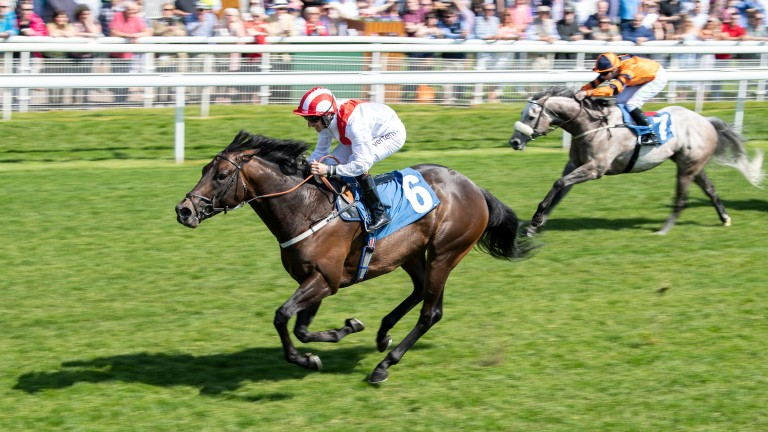 Invincible Army: top sprinter went unsold at the breeze-ups