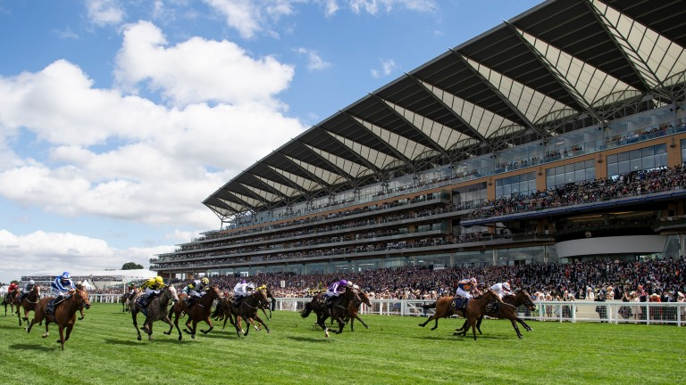 Signora Cabello: filly won at Royal Ascot after landing the Marygate