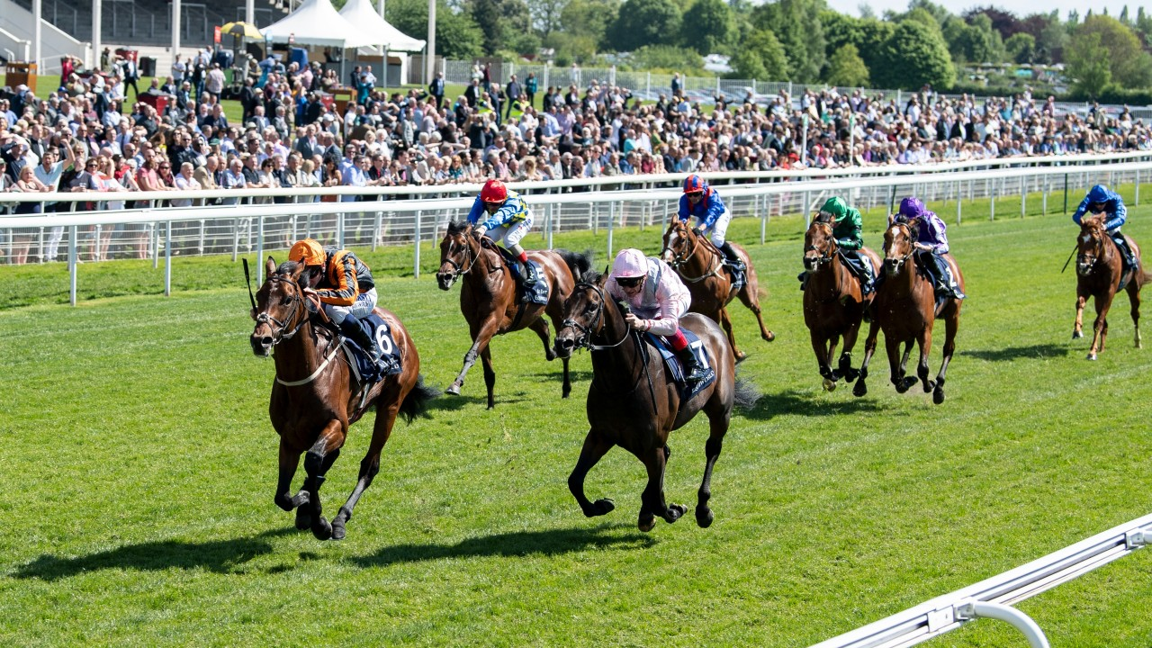 Betting 2000 guineas field papal election 2021 betting online