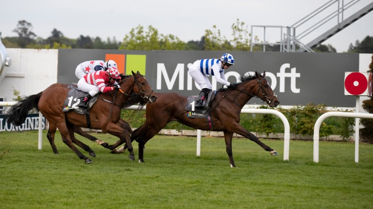 Arthurian Fame: has 12lb to find on ratings with Micro Manage but has course form at Galway