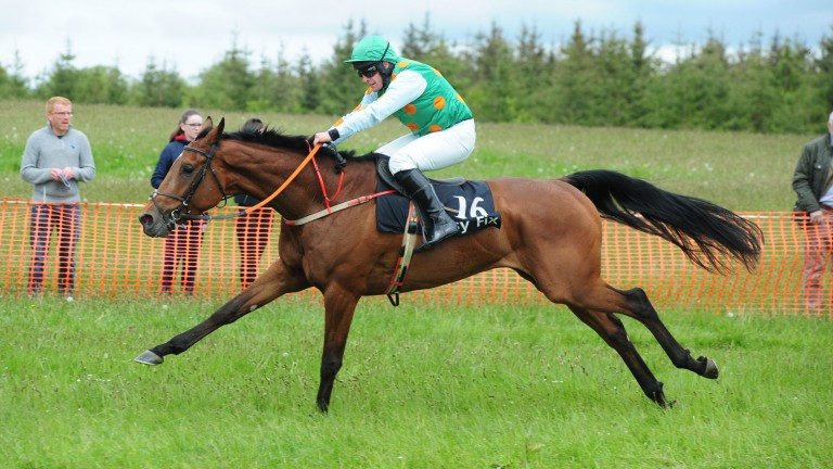 Gunsight Ridge: bought privately after a runaway win in an Irish point-to-point and nominated by his trainer as one to follow