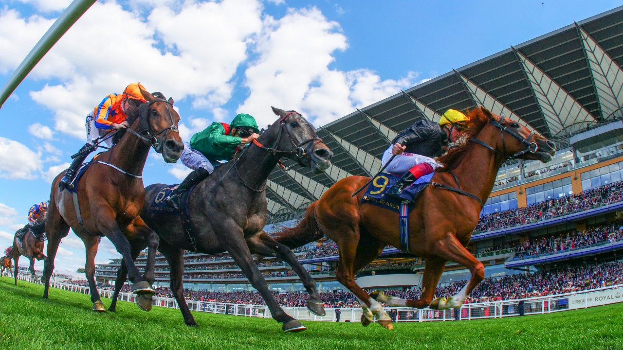 how to horse betting guide