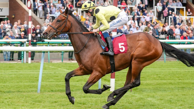 Pierre Lapin: raced once this season when winning at Haydock