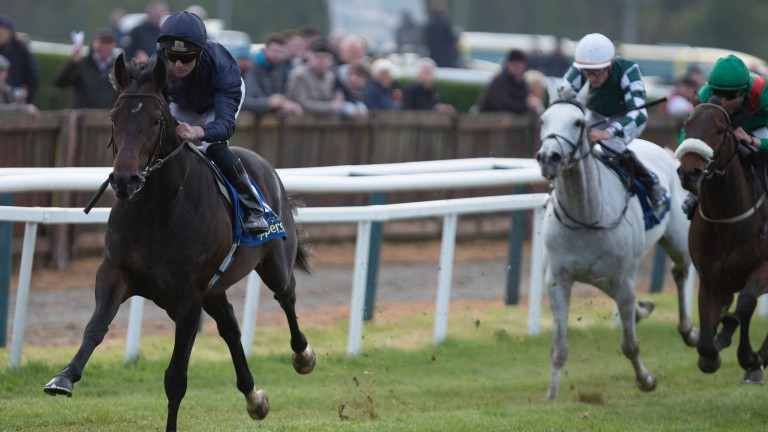 Sir Dragonet: the star attraction on the opening day of the Irish Flat season at Naas