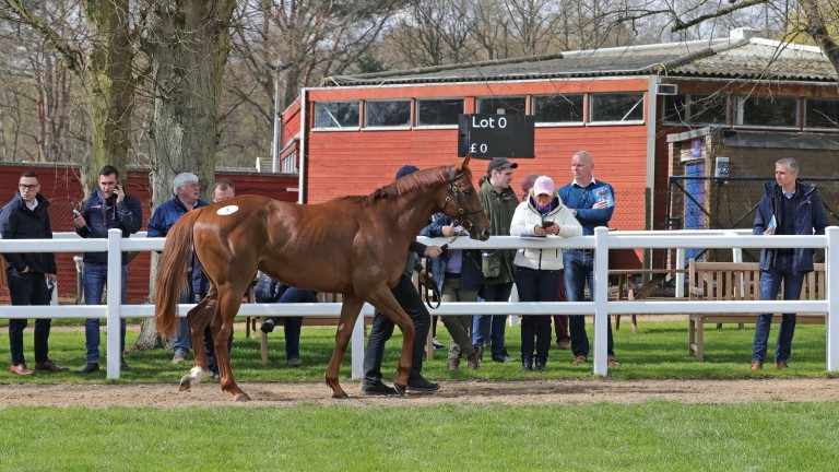 Tattersalls Ascot: selling is set to take place again next Thursday