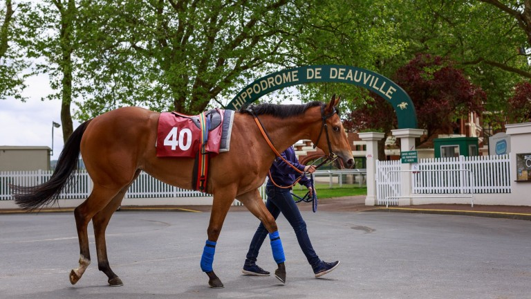 Lot 40 at the Arqana breeze-up sale heads for Deauville racecourse