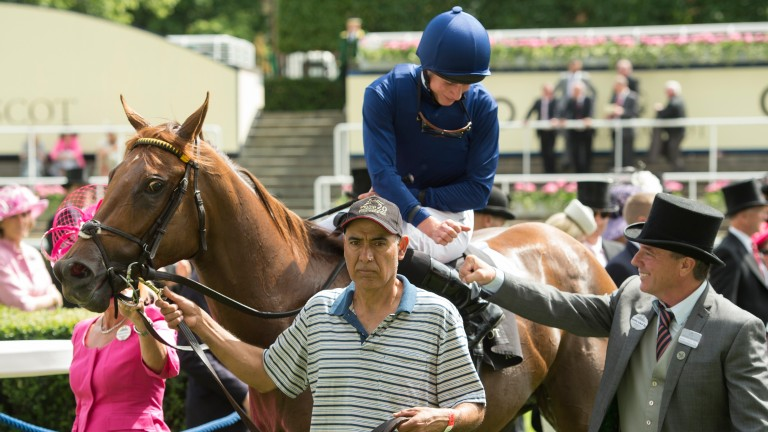 Acapulco: one of many juvenile Royal Ascot winners for Wesley Ward