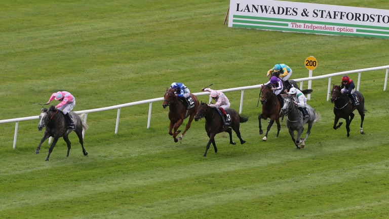 Phoenix Of Spain (leading) renews rivalry with Too Darn Hot in today's St James's Palace Stakes