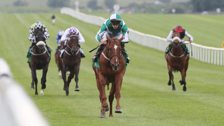 Micro Manage: reverts to the Flat after being turned over as favourite on his last two starts over hurdles