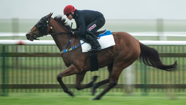 Houtzen makes her first start for Martyn Meade in the King George Qatar Stakes