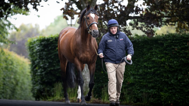 Galileo: up to 79 Group/Grade 1 winners and counting