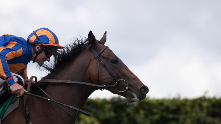 Royal Lytham: won nicely at Navan on debut