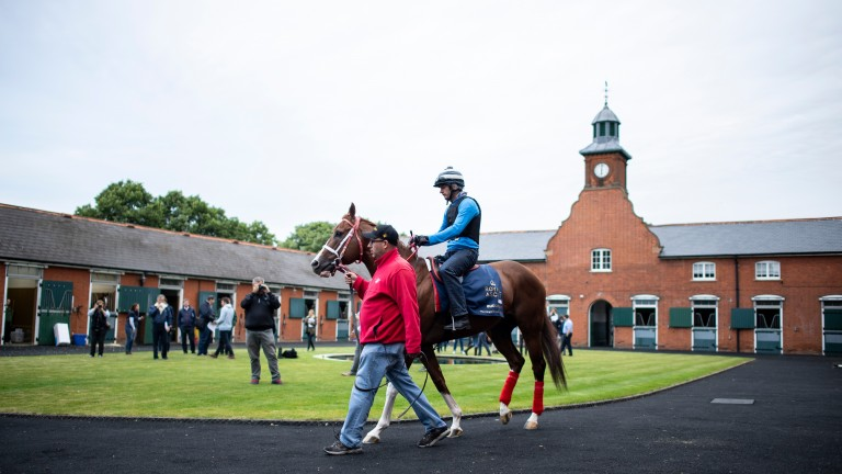 Bucchero was one of last year's international visitors to Royal Ascot