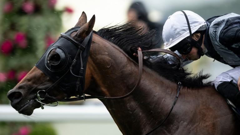 Circus Maximus: winner of the St James's Palace Stakes last season