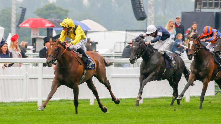 Addeybb (yellow): won comfortably at Royal Ascot