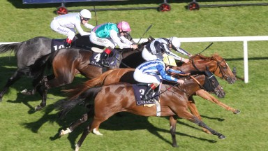 Duntle (white cap) edges out Chachamaidee (near side) in the Matron Stakes, only to be demoted after causing interference