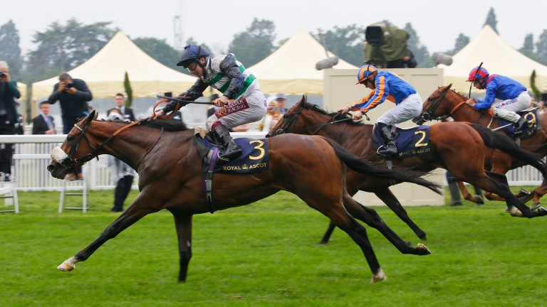 Dashing Willoughby sticks out his neck gamely to win the Queen's Vase