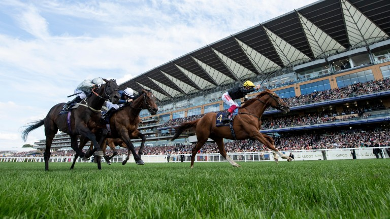 Stradivarius: is all heart as he lands a second Gold Cup