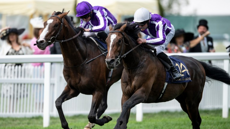 South Pacific (right) could be an each-way player in Tuesday's Goodwood Cup