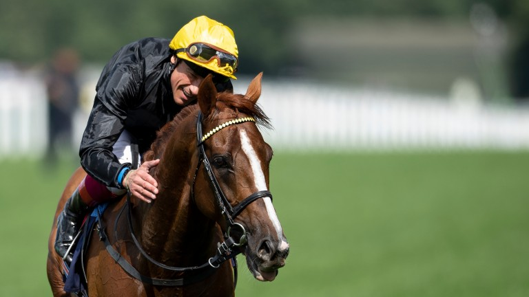 Stradivarius: attempting for a fourth Gold Cup success on Thursday