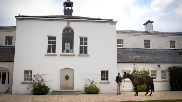 Sea The Stars is paraded by stallion man Ray Moore at the Aga Khan's Gilltown Stud