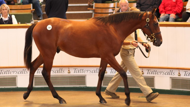 Japan sells as a yearling, when he commanded 1,300,000gns