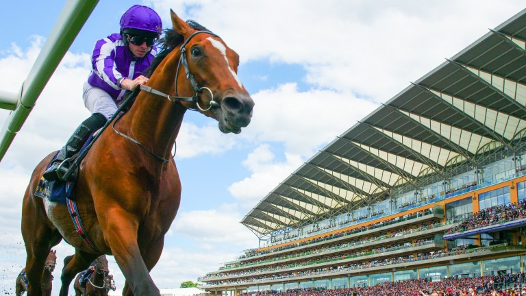 Japan: odds-on in places for the Prince of Wales's Stakes